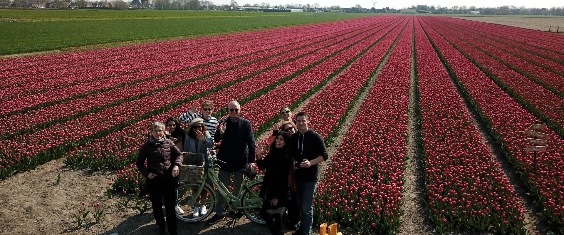 Tulip private tour at Tulip Tours Holland in Venhuizen
