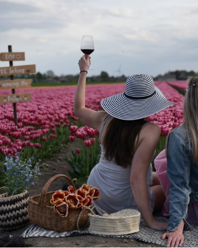 Private Tulip Tour at Tulip Tours Holland in Venhuizen book and visit the farm