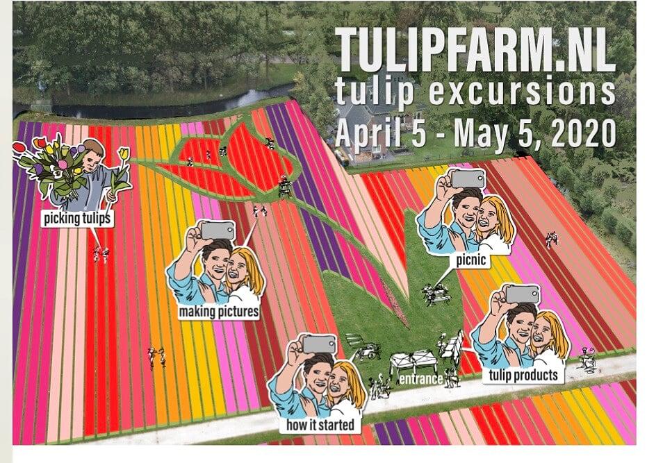 Tulip farm Holland - visit us