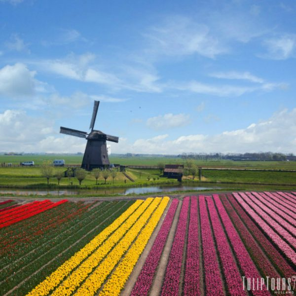 The mill at Tulip Tours Holland in Venhuizen