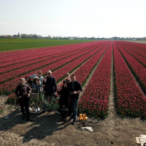 Tulip group tour at Tulip Tours Holland in Venhuizen