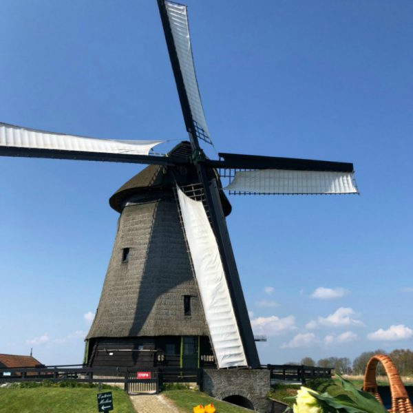The mill at Tulip Tours Holland in Venhuizen, visit our tulip farm? Book your own tour now!