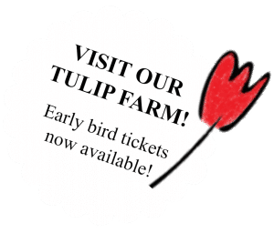 Visit our tulip farm, book a tour at Tulip Tours Holland in Venhuizen