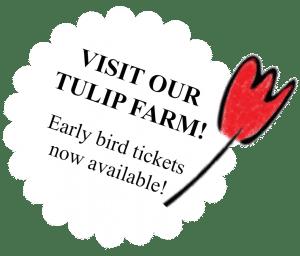 Visit our tulip farm, book a tour at Tulip Tours Holland in Venhuizen