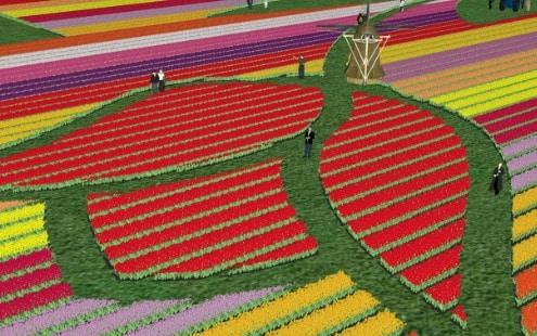 Visit a real tulip farm - exclusive tour 14.30 pm