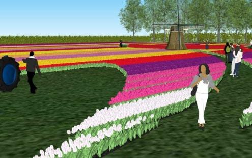 Visit a real tulip farm - exclusive tour