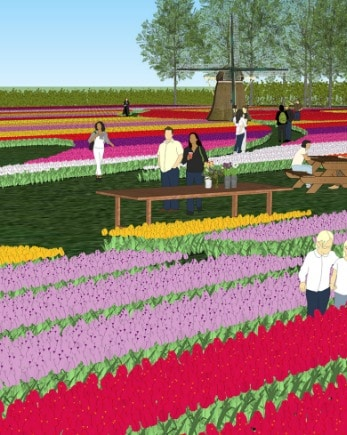 Visit a real tulip farm - Tour