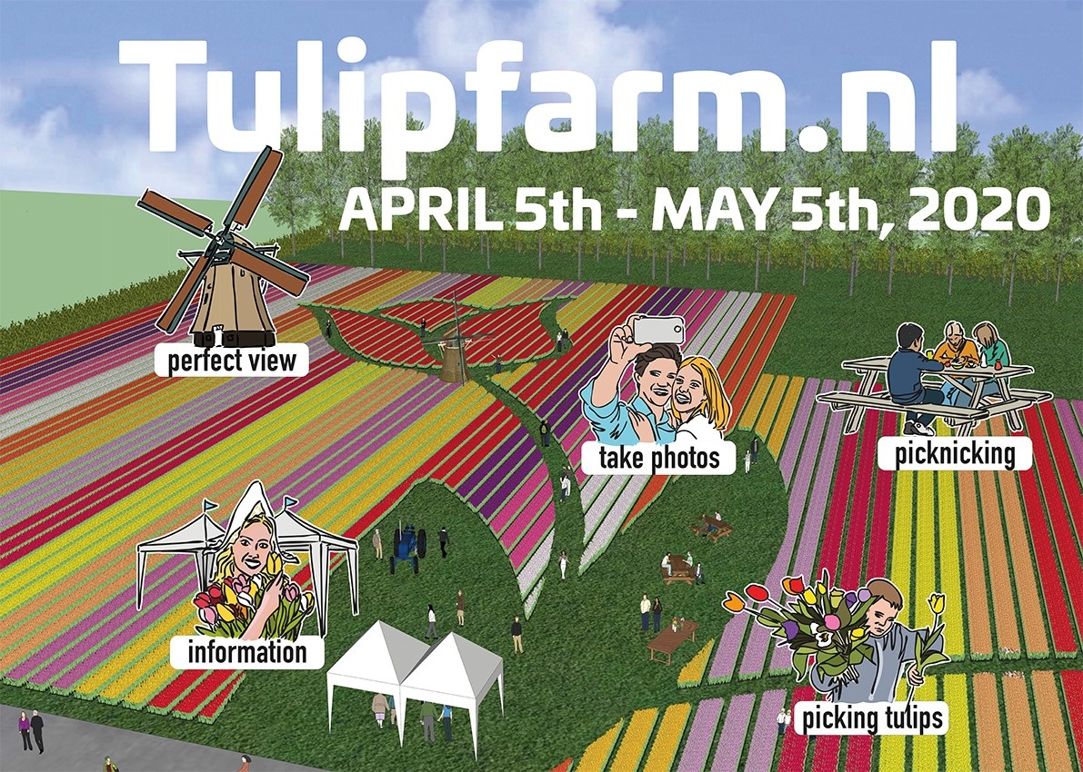 Tulip farm Venhuizen april 5th - may 5th 2020, book your tulip tour at Tulip Tours Holland
