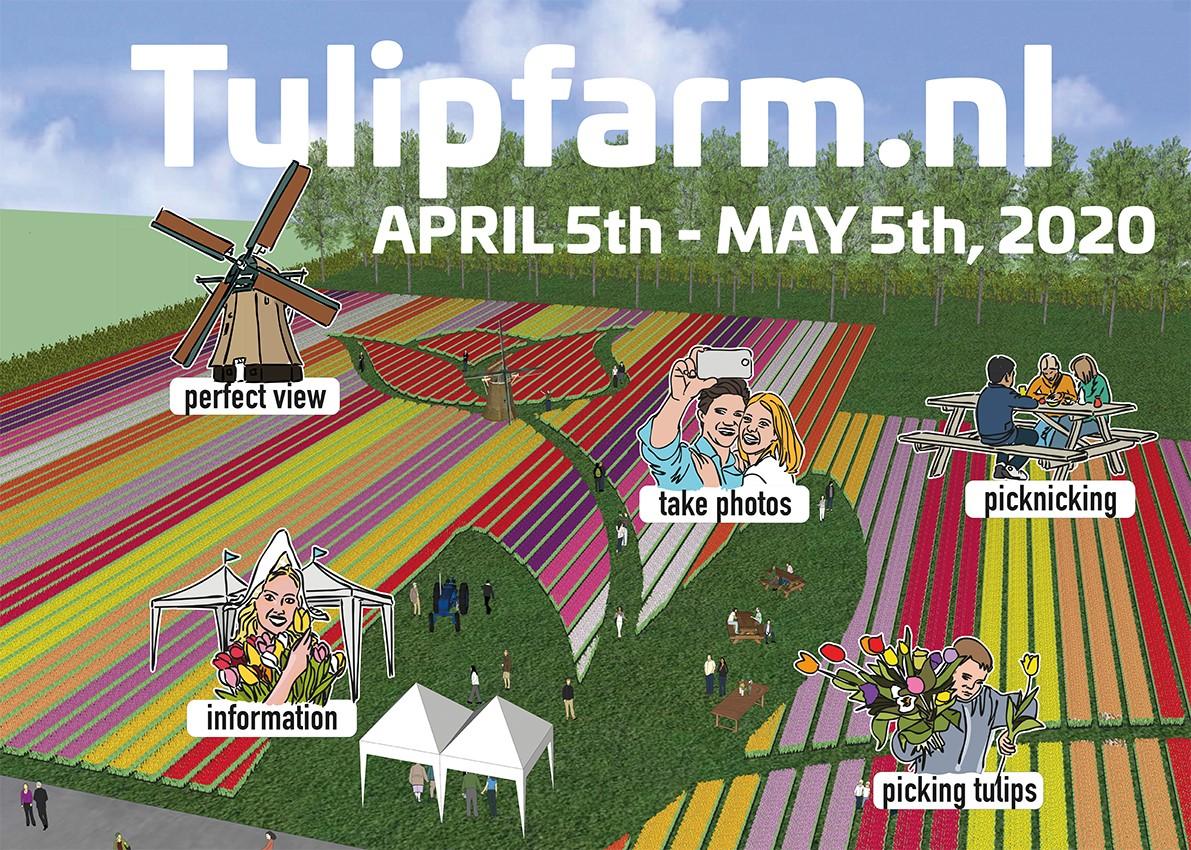 Tulip farm Venhuizen april 5th - may 5th 2020, book your tulip tour at Tulip Tours Holland