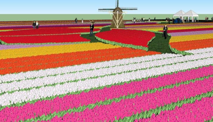 Tulip Farm Venhuizen