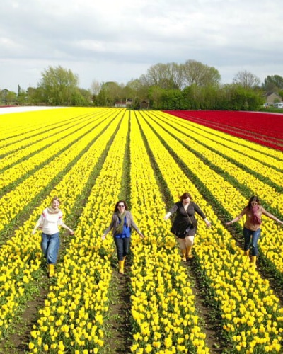 Tulip Private tour in Holland