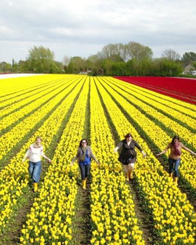 Tulip Private tour in Holland