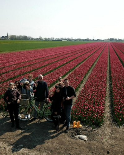 Tulip group tour from Amsterdam_500x400