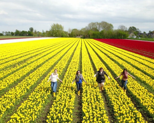 tulip private tour from amsterdam 500x400